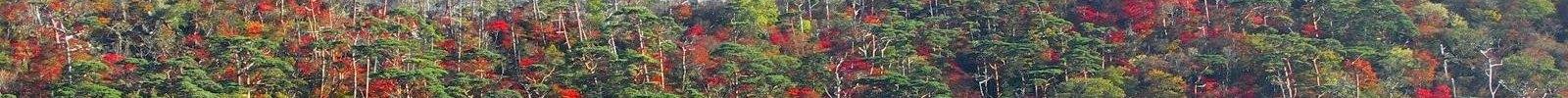 えびの高原 六観音御池の紅葉 04