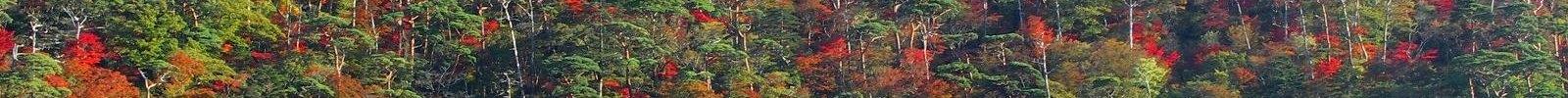 えびの高原 六観音御池の紅葉 05