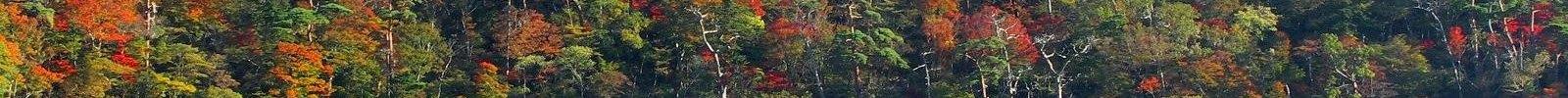 えびの高原 六観音御池の紅葉 06