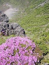 韓国岳登山(ミヤマキリシマ)