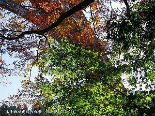 高千穂峡の紅葉|高千穂大橋の下より