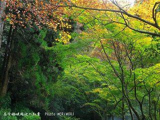 高千穂峡の紅葉|おのころ池道を隔てた茶屋付近