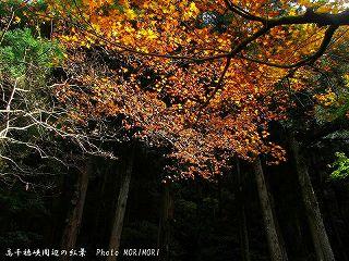 高千穂峡の紅葉|玉垂れの滝の脇のところ