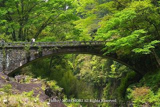 高千穂峡の新緑 2010年撮影 09 神橋