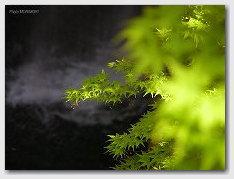 高千穂峡の新緑