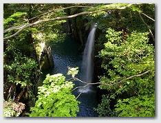 真名井の滝周辺の新緑