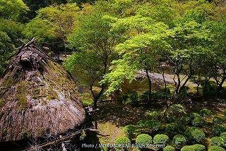 高千穂峡の新緑 03