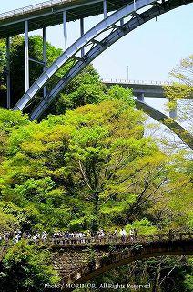 高千穂峡の新緑 09